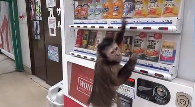 Monkey and Vending Machine