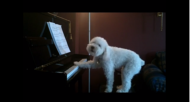 Dog_&_Piano