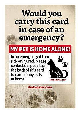 courtesy of Lawton Animal Welfare Center