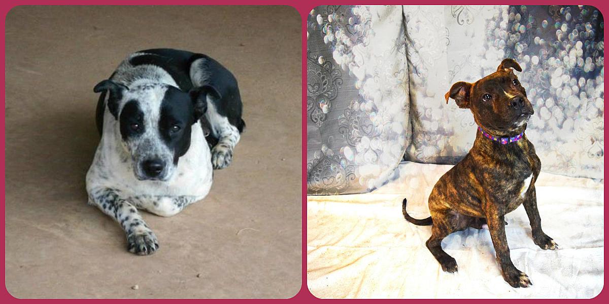 photos courtesy of Stephens County Humane Society