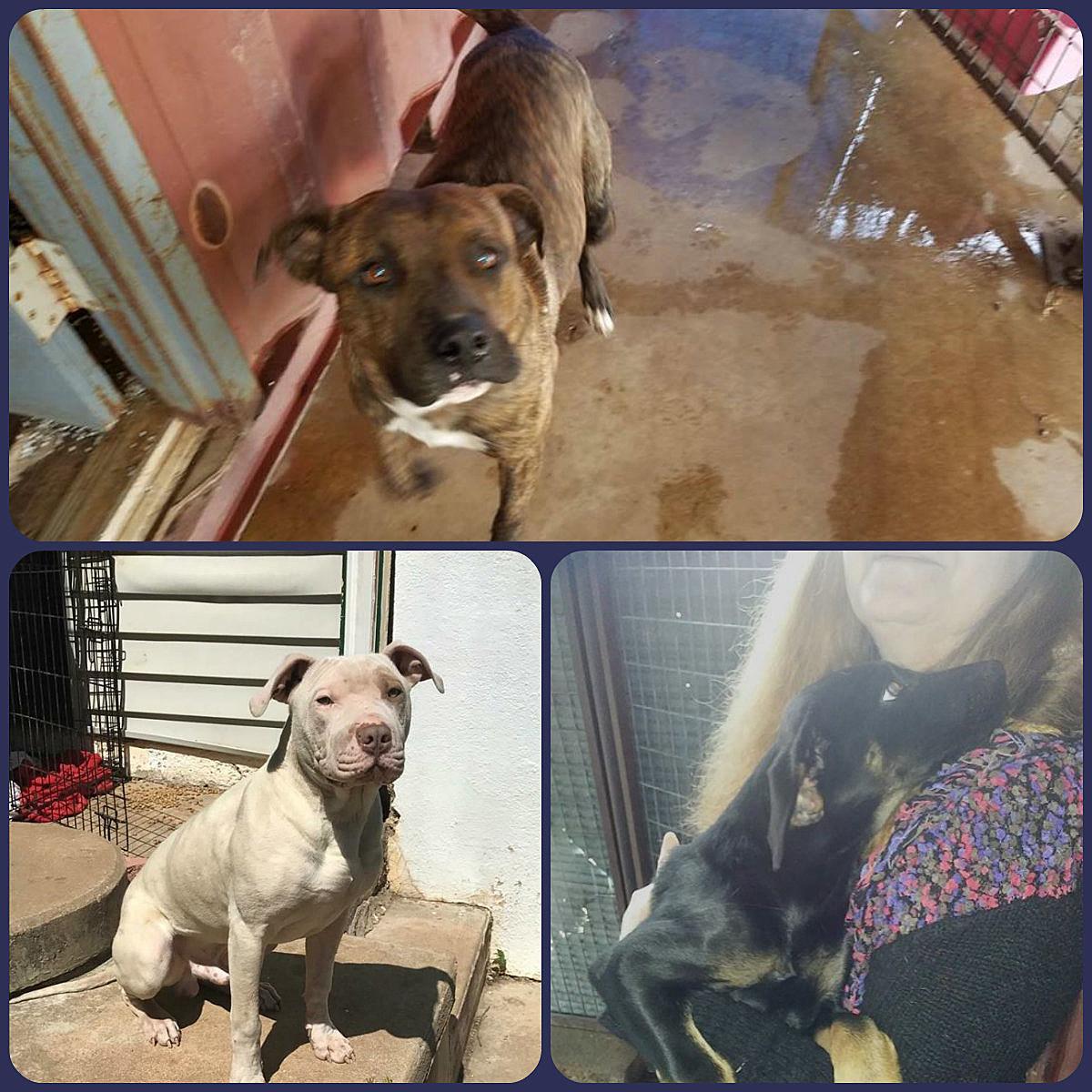 photos courtesy of Carnegie Animal Shelter