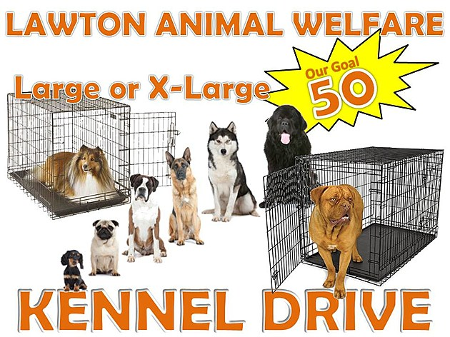 photo courtesy of Lawton Animal Welfare