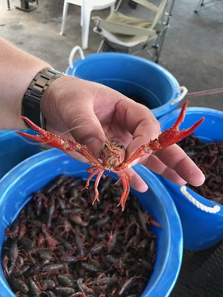 photo courtesy of www.facebook.com/pg/crawdsnrods/photos/