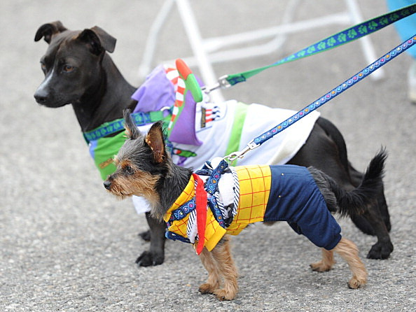 The Rock 'n' Roll Los Angeles Halloween Half-Marathon Benefitting The ASPCA